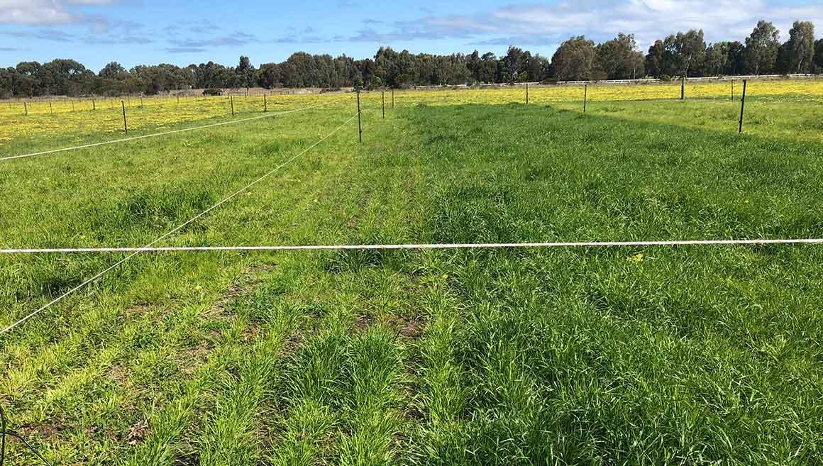 Nitrogen-on-pasture